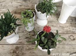 upcycled succulent garden gift idea