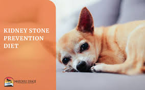 the kidney stone prevention t