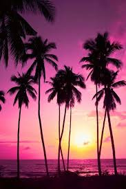 palm palm trees pink summer trees