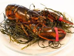 Cape Porpoise Lobster ...