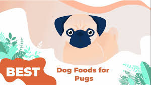best dog food for pugs 2020 pup junkies