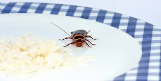 Residential Pest Control Services from Sunstate Cleaning
