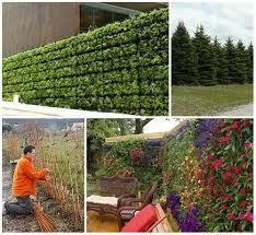 A Collection Of Living Privacy Fence Ideas Iseeidoimake