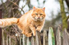Cat Repellents Advice Guides Which