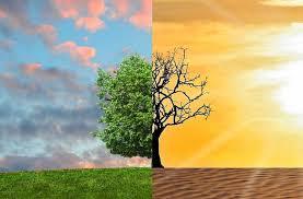 Resultado de imagen de emergencia climatica