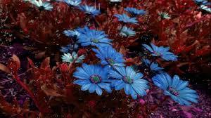 خلفية للمونتاج قطرات الندى تتساقط على الورود بدون حقوق تصميمي Hd
