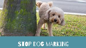 how to stop a dog from marking