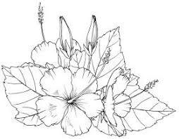 Hibiscus Bloemen Tekenen Illustratie Bloem Kleurplaten
