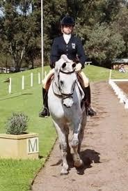Aust pips NZ in international showman contest | Horsetalk - International  horse news