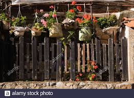 Pink And Red Pelargonium Geranium Flowers In Hanging Baskets Covered With Hand Bags Over Old Wooden Picket Fence In Backyard Garden In Early Autumn Stock Photo Alamy