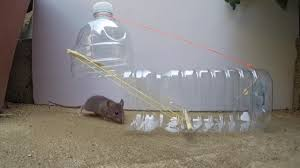 8 genius diy mouse traps that will fix