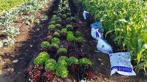 Coast of Maine's Trial Garden - Felicia Newman Quality Director - YouTube