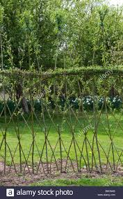 Willow Fence High Resolution Stock Photography And Images Alamy