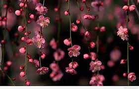 awesome spring flowers quote desktop background