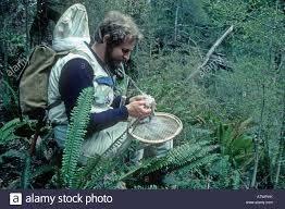 Scienziato entomologo con net e aspiratore di insetti di raccolta ...