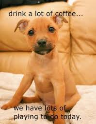 best caffeinated dogs images dogs cute animals cute dogs
