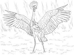 Afrikaanse Zwarte Kraanvogel Kleurplaat Gratis Kleurplaten Printen