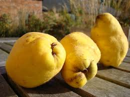 quince for the memory finegardening