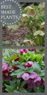 best shade plants flowering shade