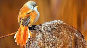 خلفيات طيور