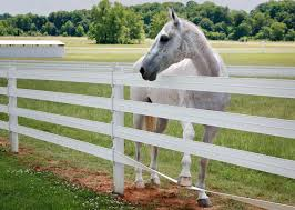 Flexible Horse Fence Gallery Traditional Appearance Not Traditional Problems