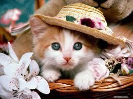 خلفيات قطط صور حيوانات اليفه تجنن كيف