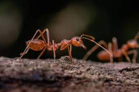 Download Pest Ant Control Near Me  PNG