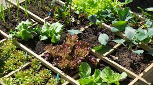3 square foot gardening layouts that