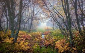 hd wallpaper forest magical colors in
