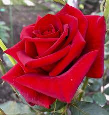 اجمل الورود والمناظر الطبيعية Added A اجمل الورود والمناظر