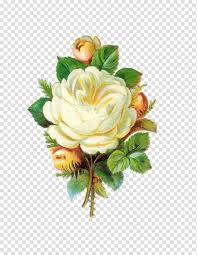 باقة ورد روز عتيقة وردة بيضاء Png