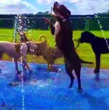 our splash pads are for the dogs
