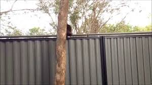 Julie S Escape Over Cat Proof Fence Youtube