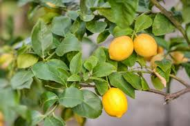 how to grow the best fruit trees for