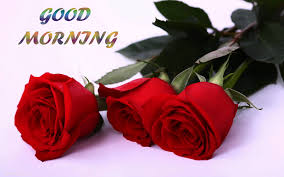 romantic love good morning red rose