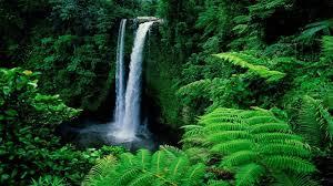 beautiful natures wallpaper around