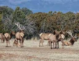 High Fence New Mexico Game Park Land For Sale In Nm Mossy Oak Properties