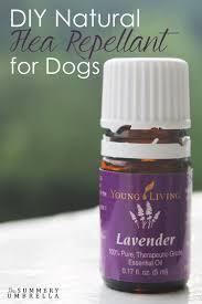 diy natural flea repellent for dogs