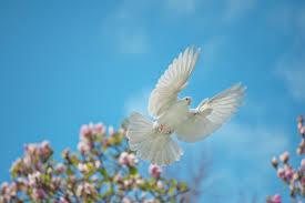 O Espírito Santo nos dá a eterna paz! - 11/01/18 - Universal.org ...