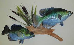 photos for your replica fish mount