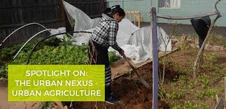 growing food in the city low income