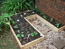 square foot gardening in south africa