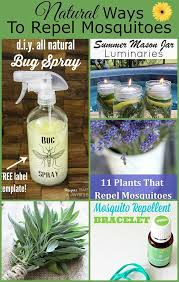 repel mosquitoes without bug spray