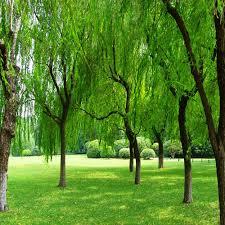 Laeacco في الهواء الطلق الأخضر أشجار الحديقة حديقة التصوير الخلابة