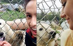 Video Teens In Hot Water For Jumping Zoo Barrier In Polar Bear Selfie Thespec Com