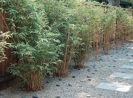 10 Bamboo Landscaping Ideas Garden Lovers Club