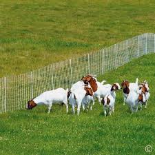14 Best Goat Fences Must Read Reviews For November 2020