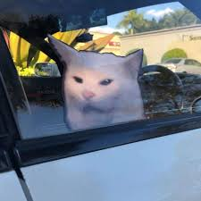 Confused Cat Meme Decal Spinnywhoosh Graphics