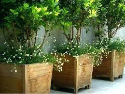 pots for outdoor plants elets info