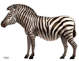 Zebra Mural Zebra Wall Decal Safari Jungle Animal Mural